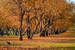 autumn forest Στοκ εικόνες με δικαίωμα ελεύθερης χρήσης