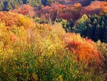 Autumn Forest Immagine Stock Libera da Diritti