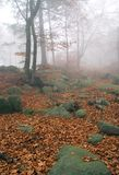 Autumn forest. Autumn in the foggy forest stock photos