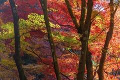 Autumn Forest Lizenzfreies Stockfoto