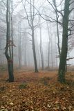 Autumn forest. In the foggy day stock image