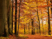 Autumn forest stock photos