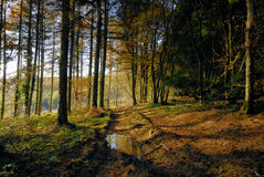 Autumn Forest. And muddy track Royalty Free Stock Images