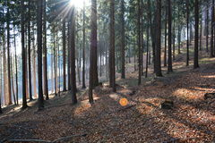 Autumn forest. Leaves are symbols of autumn Stock Photo
