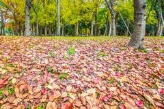 Autumn Forest stock fotografie