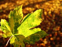 in the autumn forest Royalty Free Stock Photography