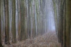 Autumn Forest Fotografia Stock