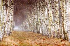 Autumn Forest Immagini Stock
