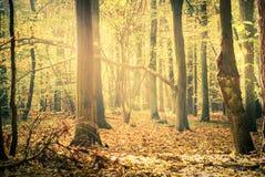 Autumn Forest Lizenzfreie Stockfotos