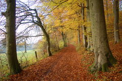 Autumn in forest Stock Photo