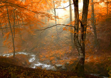 Autumn in the forest. Stream in the autumn forest Royalty Free Stock Image