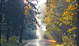 Autumn forest. Sunset in autumn forest, dark and light concept royalty free stock photo
