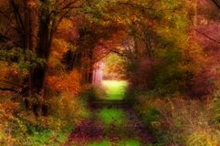 Autumn forest Stock Image