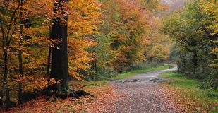 Autumn forest. A shot of the forest in autumn Royalty Free Stock Photo