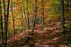 Autumn Forest. A path through the forest in autumn Stock Images