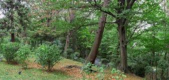 Free Autumn Forest Royalty Free Stock Photos - 71772478