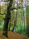 Autumn in forest Royalty Free Stock Images