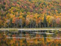 Autumn forest. Autumn lake and colorful forest Royalty Free Stock Photography