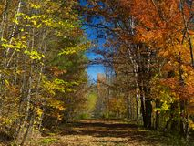 Autumn forest. Colorful trail in the autumn Royalty Free Stock Image