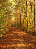 Autumn forest. Colorful forest in autumn sun Royalty Free Stock Image