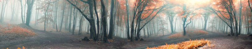 Free Autumn Forest Stock Images - 82258984
