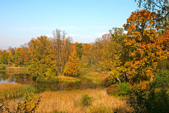 Free Autumn Forest Stock Photography - 9569672