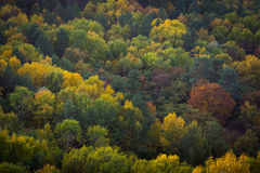 The autumn forest from above.  royalty free stock photos