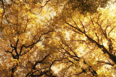 Autumn forest abstract stock photo