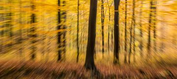 Autumn forest abstract blur motion wood landscape Stock Photography