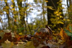 Autumn in forest stock image