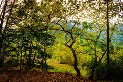 Autumn Forest Of Aegean Region imagem de stock royalty free