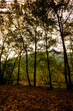 Autumn Forest Of Aegean Region Royalty Free Stock Images