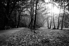 Autumn Forest Of Aegean Region Royalty Free Stock Image