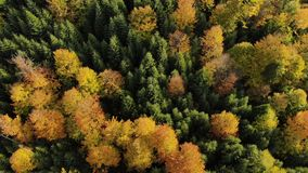 Autumn forest aerial colorful trees drone mountains