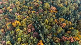 Autumn forest aerial drone top view Stock Image
