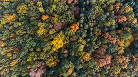Autumn forest aerial drone view Royalty Free Stock Photography