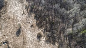 Autumn forest aerial drone view in spring stock photo