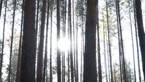 Autumn forest in the afternoon stock footage