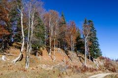 Autumn forest in Allgäu Royalty Free Stock Photography
