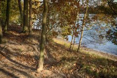 Autumn forest along the lake background Royalty Free Stock Image