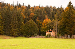 Autumn forest in Alps Royalty Free Stock Image