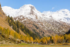 Autumn forest in the alps Royalty Free Stock Image