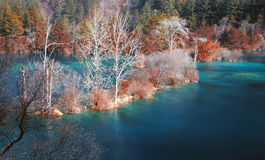 Autumn Forest And Lake Royalty Free Stock Photo