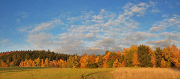 Free Autumn Forest And Sky Royalty Free Stock Image - 6728496