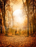 Autumn Forest And The Moon Stock Photo