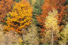 Autumn forest as background Stock Image