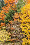 Autumn forest as background Stock Photo