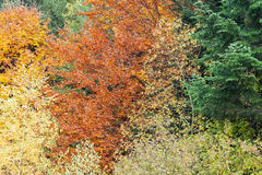 Autumn forest as background Stock Photos