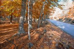 Autumn forest. At Mata da Albergaria, Geres National Park, Portugal stock image