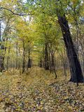 Autumn forest. Royalty Free Stock Photos